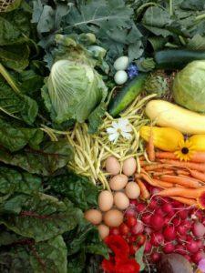veggie-rx_hdffa