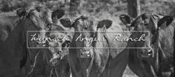 Wunsch Angus Ranch LLC